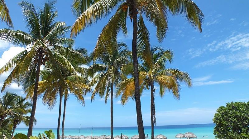 palme ai caraibi