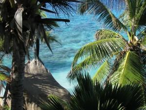 palme alle seychelles