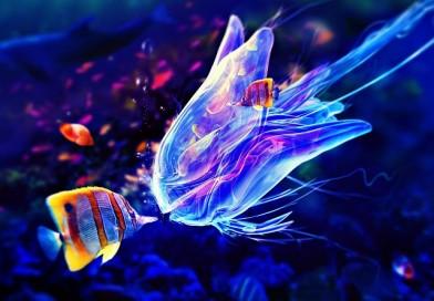 Le pericolose specie marine!