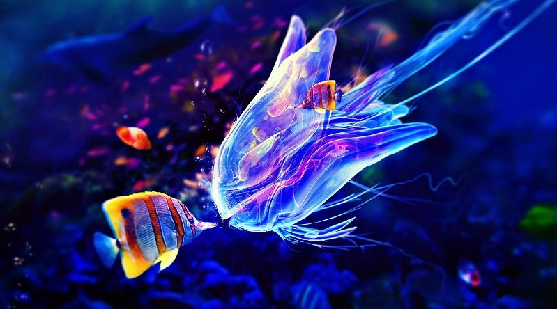 pesci e meduse colorati
